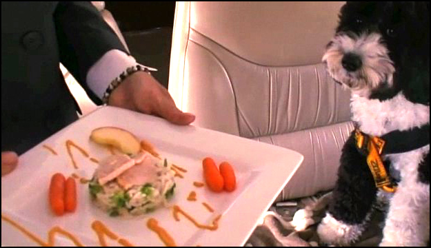 inflight pet meal example